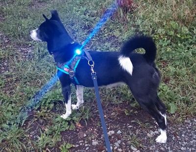 2016.11.11犬ライト1.jpg