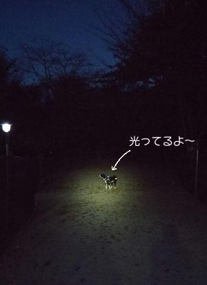 2016.11.9暗い…文字入り.jpg