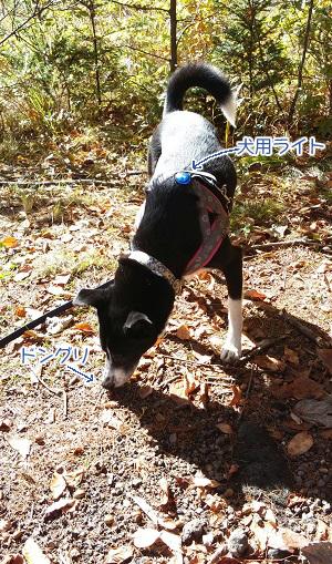 2016.11.9犬ライト文字入り.jpg