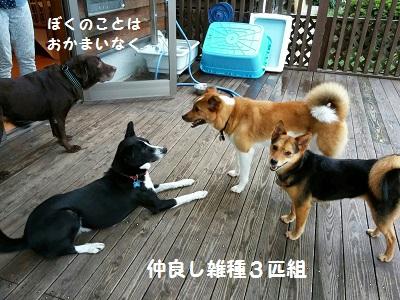 犬ホテル1.jpg