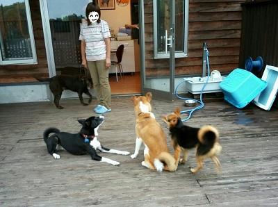 犬ホテル2.jpg