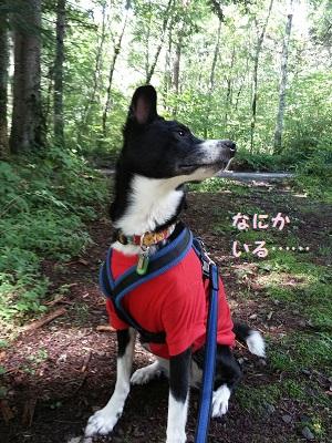 赤Tシャツ犬2.jpg