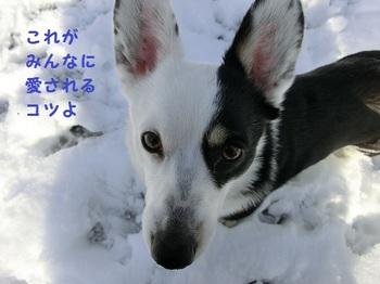 3月1日ドッグラン6.jpg