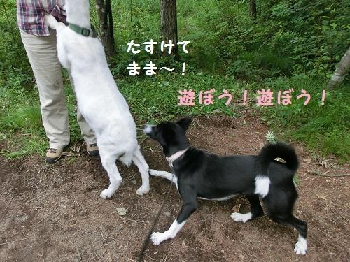 ハルノとヤギ遭遇2.jpg