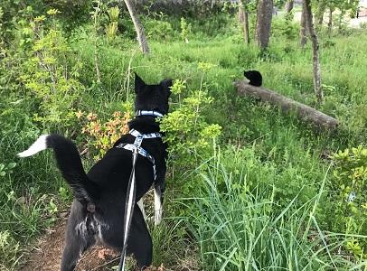 2019.5.25黒猫-2.jpg