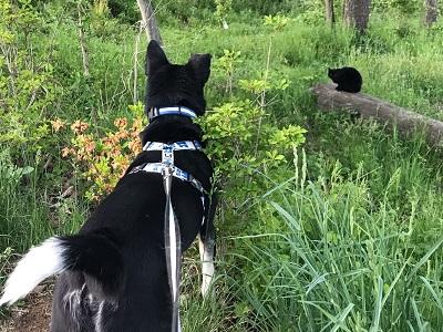 2019.5.25黒猫-3.jpg